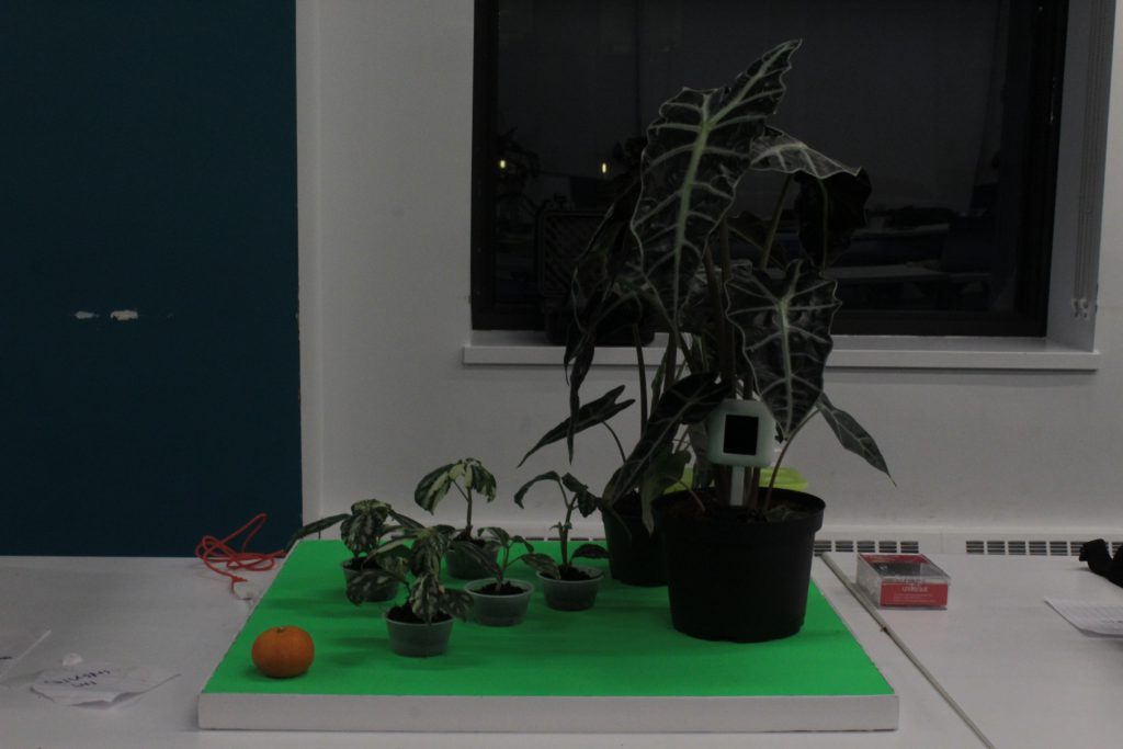 A student project which uses plants, laptop and sensors to play music by touching plants at ideation and prototyping showcase