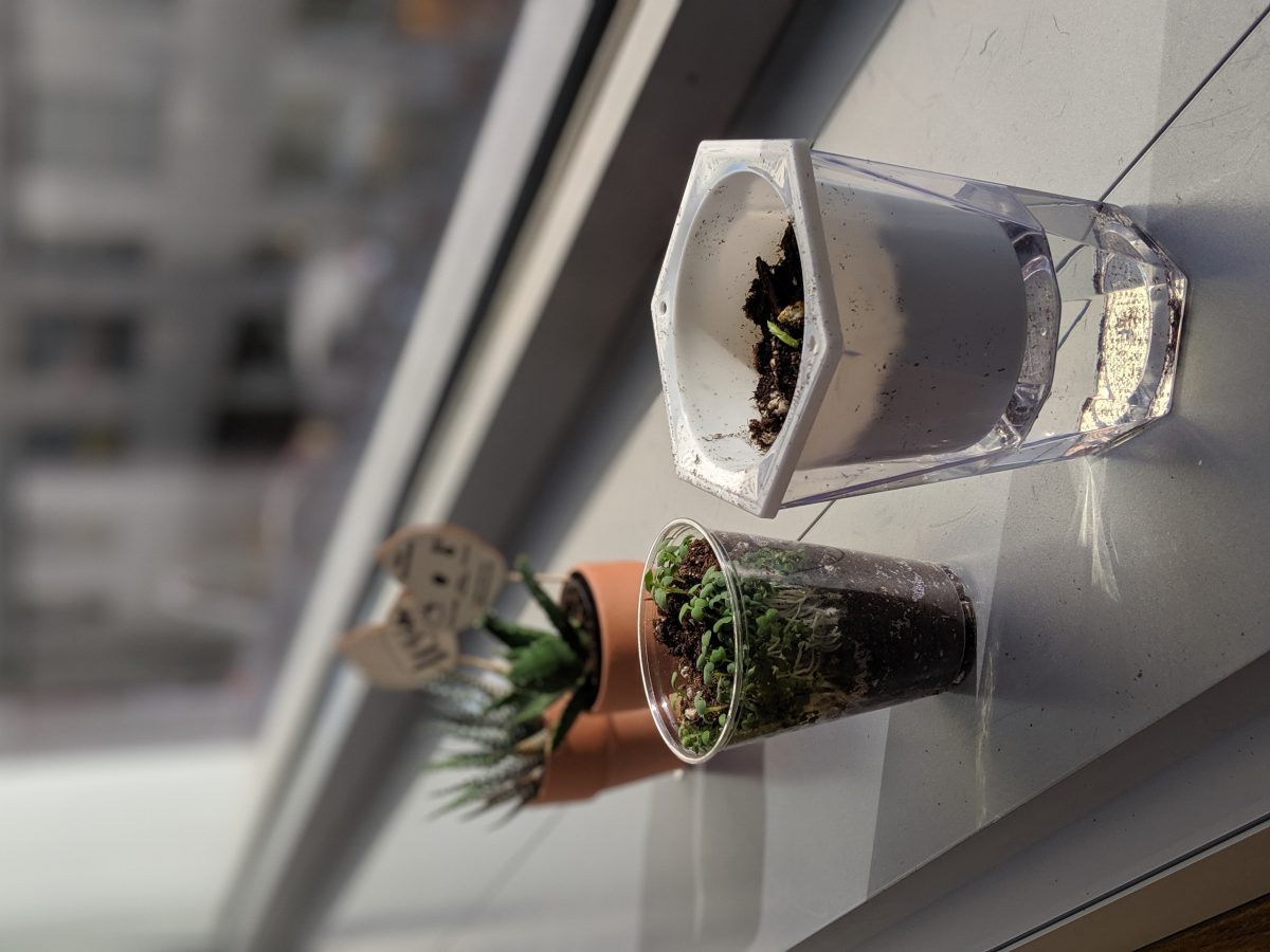 Potted plants grown by IDM students